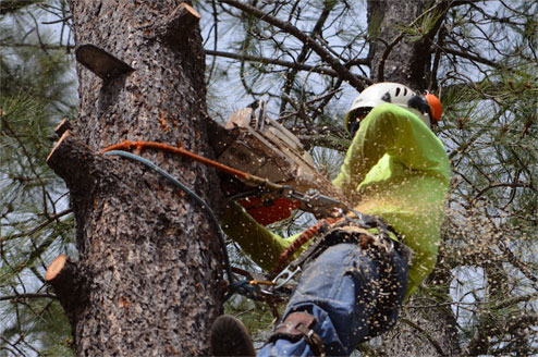 Tree removal Newcastle