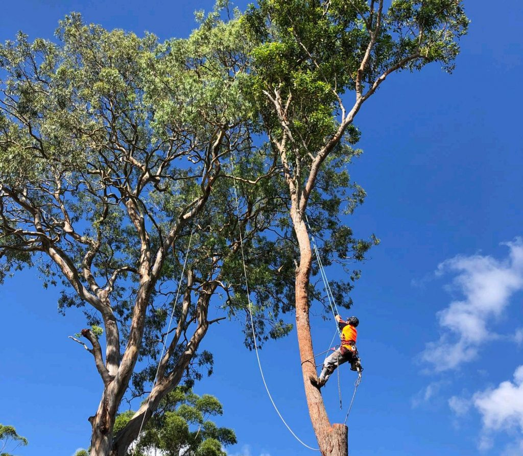 Tree Loppers Newcastle