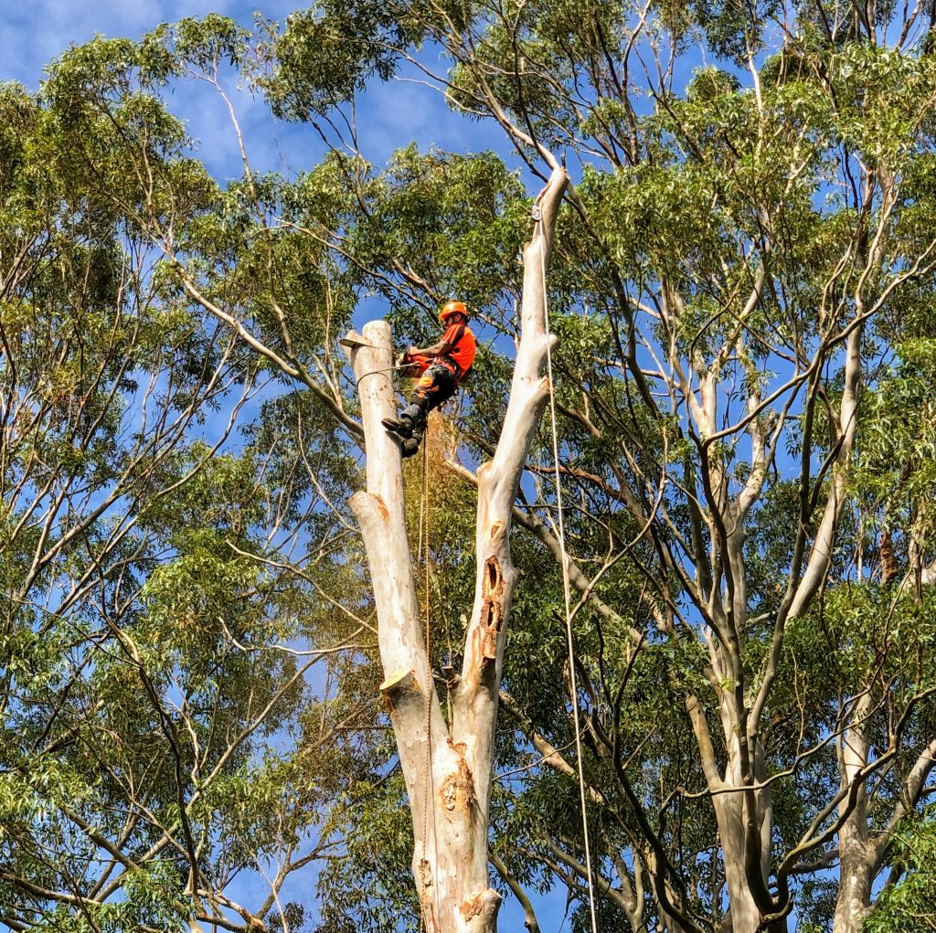Arborists Newcastle